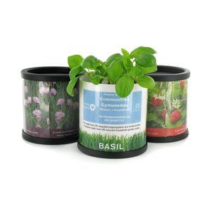 DISC Plants in Recycled Pots